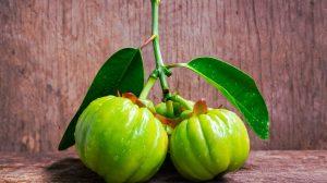 garcinia cambogia verde