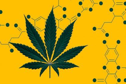 cannabinoidi cannabis struttura molecolare