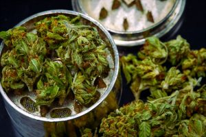 grinder cannabis img