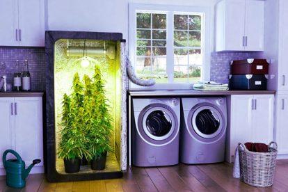 grow box cucina img