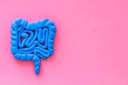 intestino permeabile img