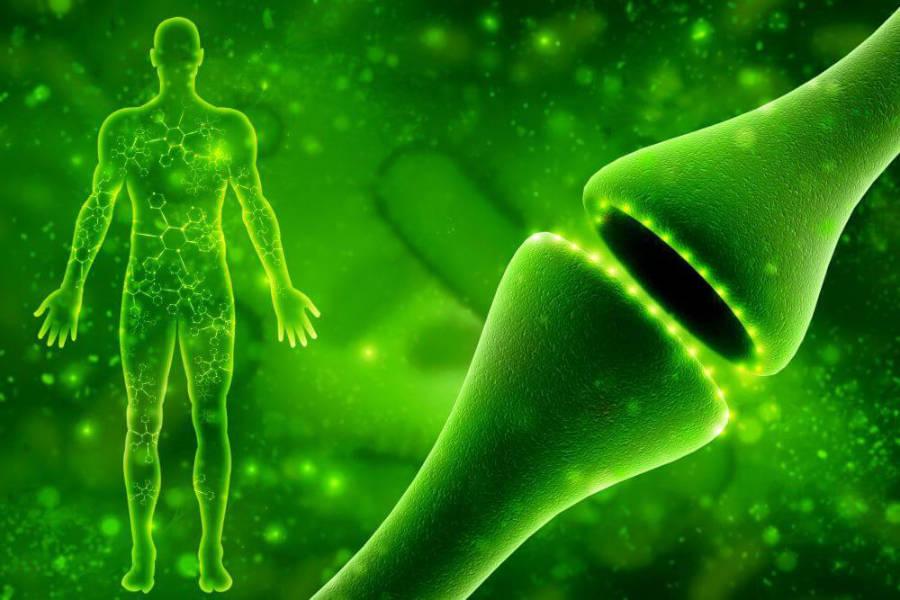 sistema endocannabinoide img