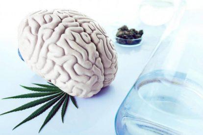 cannabis cervello img